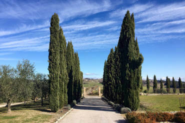 Свадьба в Тоскане